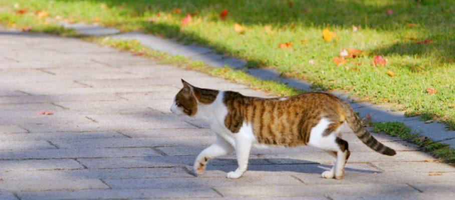 2017年5月号町内会だより 2016年度町田市 飼い主のいない猫との共生モデル団体活動報告