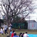 2017年5月号町内会だより 大島桜、花をめぐって焼き団子