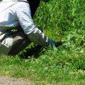 玉川学園町内会 第6地区 今年もやりました!「草刈り」