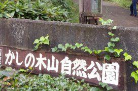 かしの木山 (1)