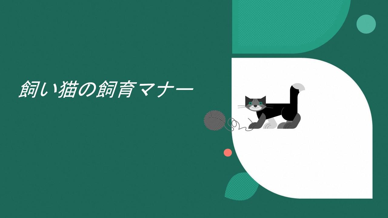 飼い猫の飼育マナーA